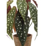 Kunstplant Begonia maculata 33cm