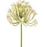 Kunstbloem Agapanthus 75 cm crème