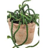 Kunstplant Crassula 18 cm in pot
