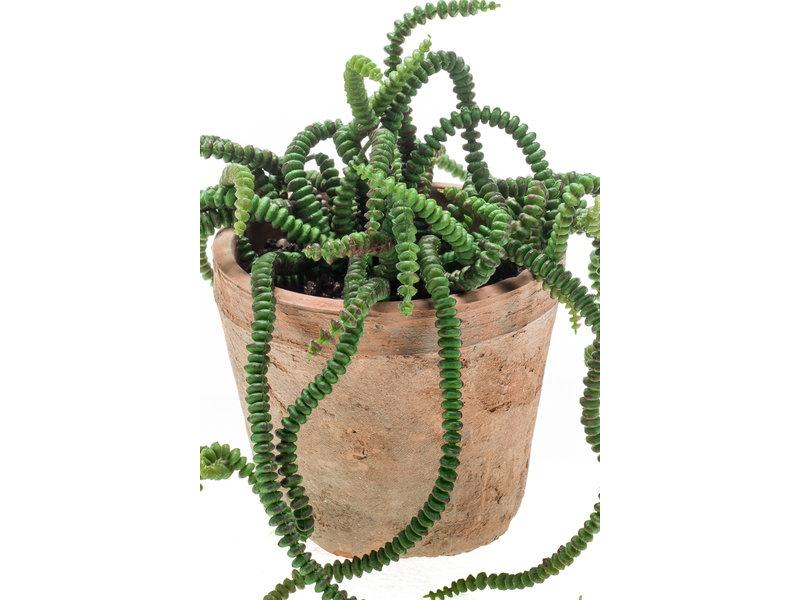 Kunstplant Crassula 14cm in pot