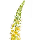 Kunstbloem Eremurus 105 cm geel