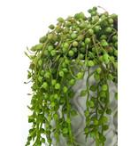 Kunstplant Senecio in cementte pot 27 cm
