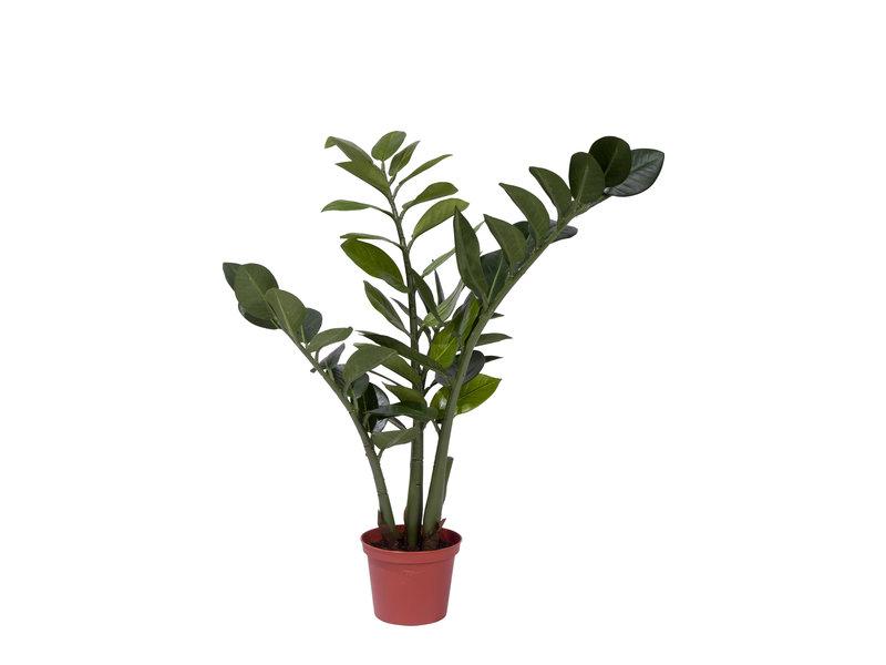Kunstplant Zamiocalcus 50cm