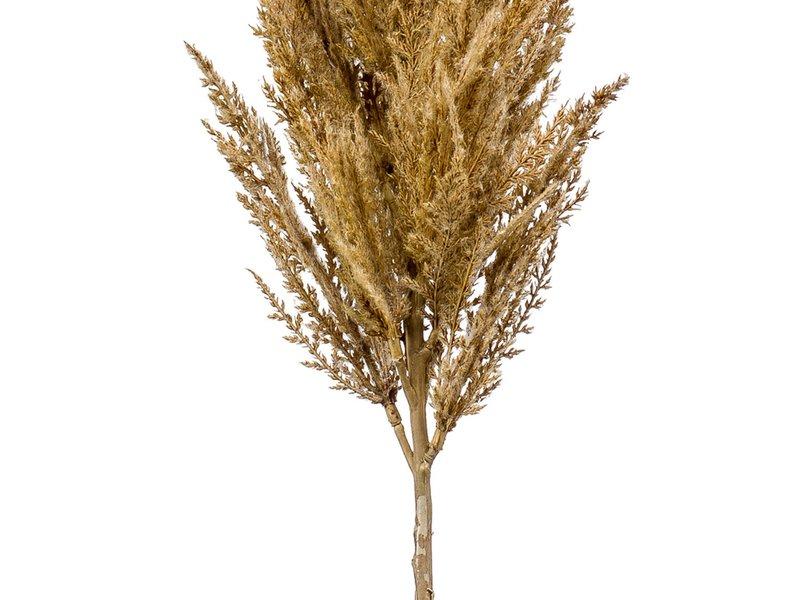 Kunst Pampas gras beige 115 cm