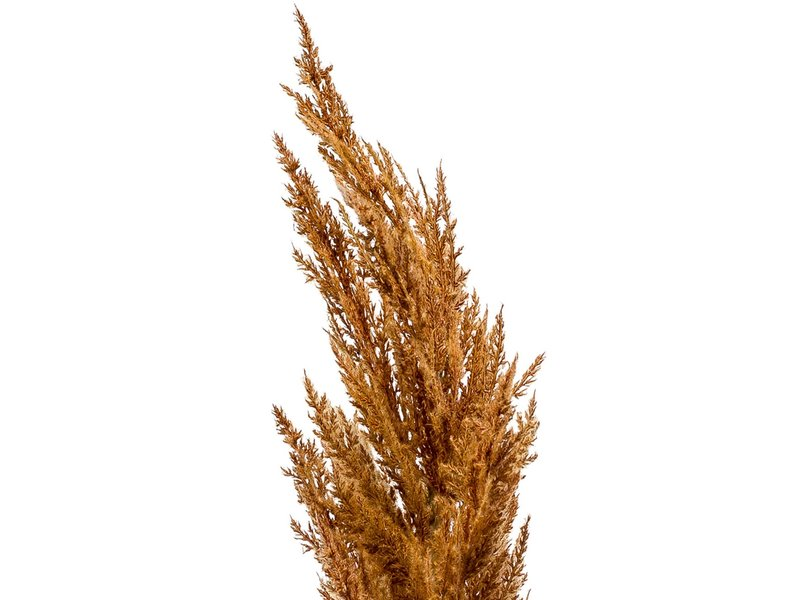 Kunst Pampas gras rust 115cm