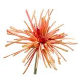 Kunstbloem Gerbera spider oranje 60 cm