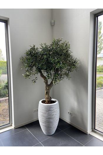 Kunst Olijfboom UV voor buiten 160-170 cm