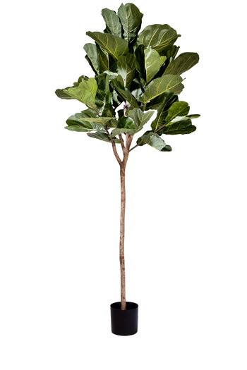 Kunstplant Fiddle Leaf 225 cm
