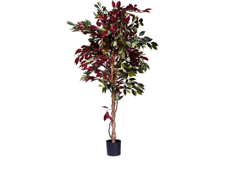 Kunstplant Ficus groen/rood 180cm brandvertragend