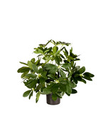 Kunstplant Baby Schefflera 45 cm