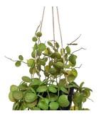 Kunst hangplant Lantaarnplant 50 cm in pot