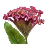 Kunstbloem Hanenkam roze 62 cm
