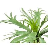 Kunstplant Staghorn 60 cm in pot