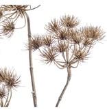 Kunstbloem Berenklauw bruin 102 cm