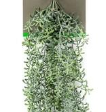 Kunst hangplant Rhipsalis 75 cm