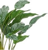Kunstplant Aglaonema 45 cm in glas