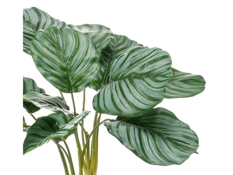 Kunstplant Calathea 39 cm in glas