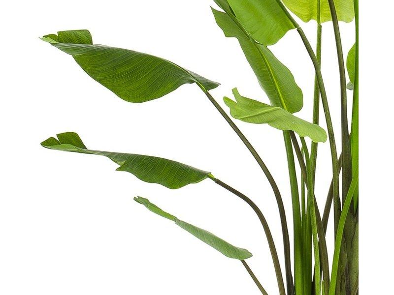 Kunstplant Strelitzia Deluxe 235 cm met groot blad
