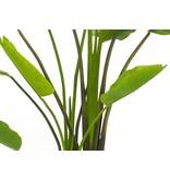 Kunstplant Strelitzia Deluxe 180 cm met groot blad