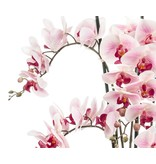 Kunstbloem Orchidee 100 cm roze in pot