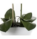 Kunst orchidee 50 cm wit in pot