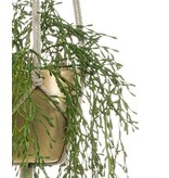Kunstplant Rhipsalis 90 cm in gouden pot
