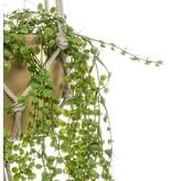Kunstplant Ficus Pumila 100 cm in gouden pot