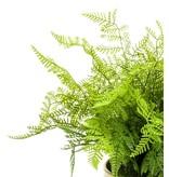 Kunstplant Varen 40 cm in gouden pot