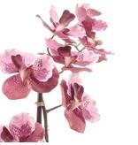 Kunstbloem Vanda 60 cm roze in pot