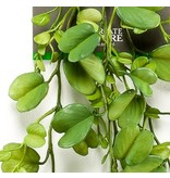 Kunst hangplant Hoya Kerrii 90 cm