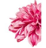 Kunstbloem Dahlia 55 cm roze