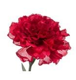 Kunstbloem Anjer 67 cm rood