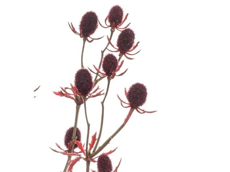 Kunstbloem Kruisdistel 72 cm bordeaux