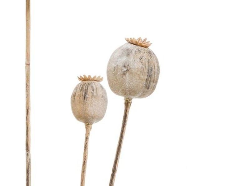 Kunstbloem Klaproos 75 cm beige