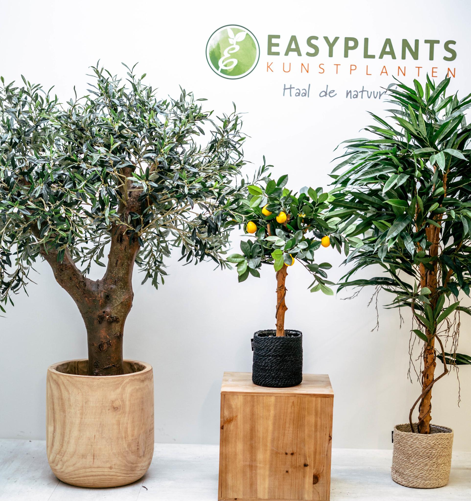 De voordelen van kunstplanten voor jou op een rij