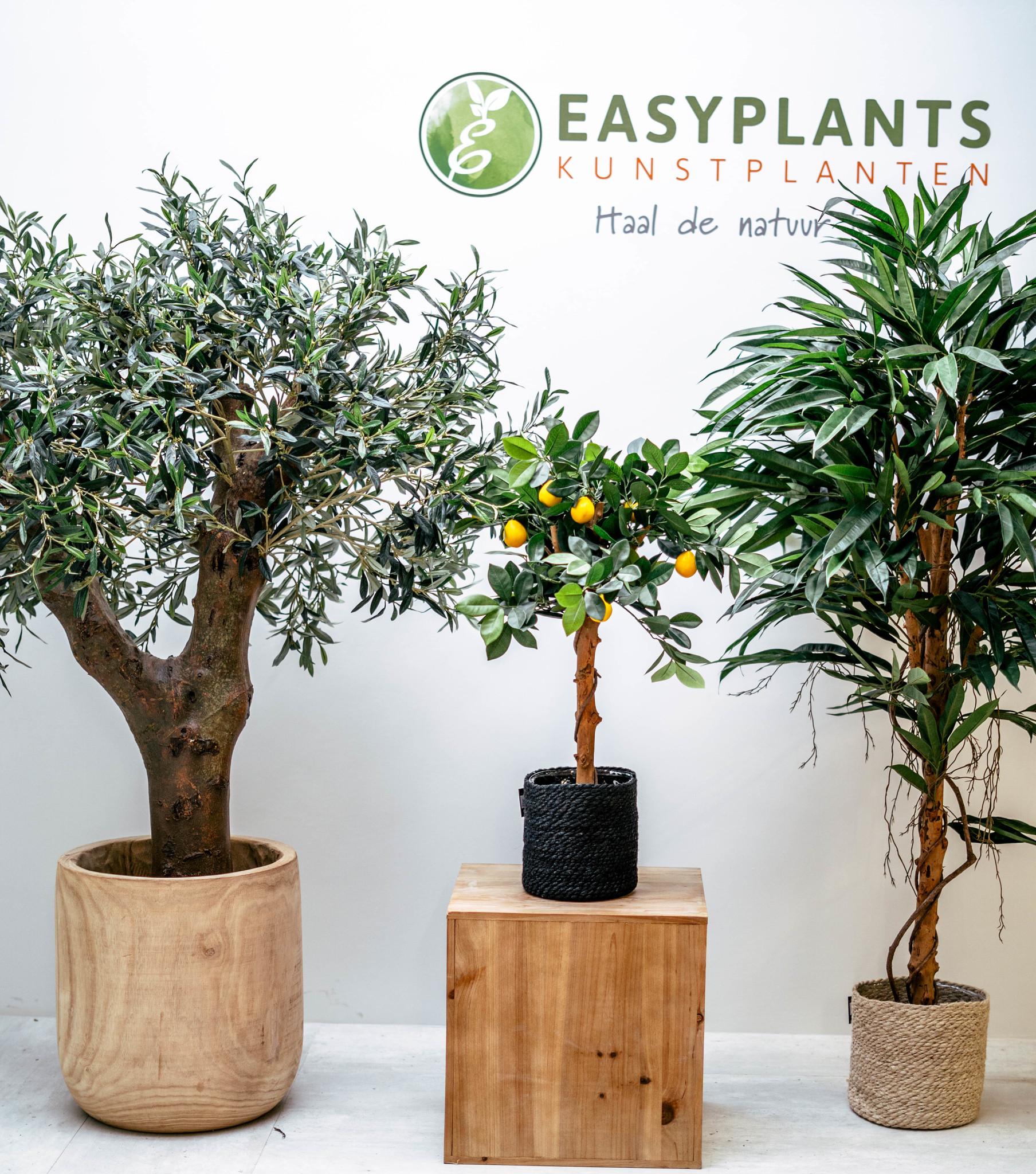 De meest gestelde vragen over kunstplanten en onze antwoorden voor jou op een rij
