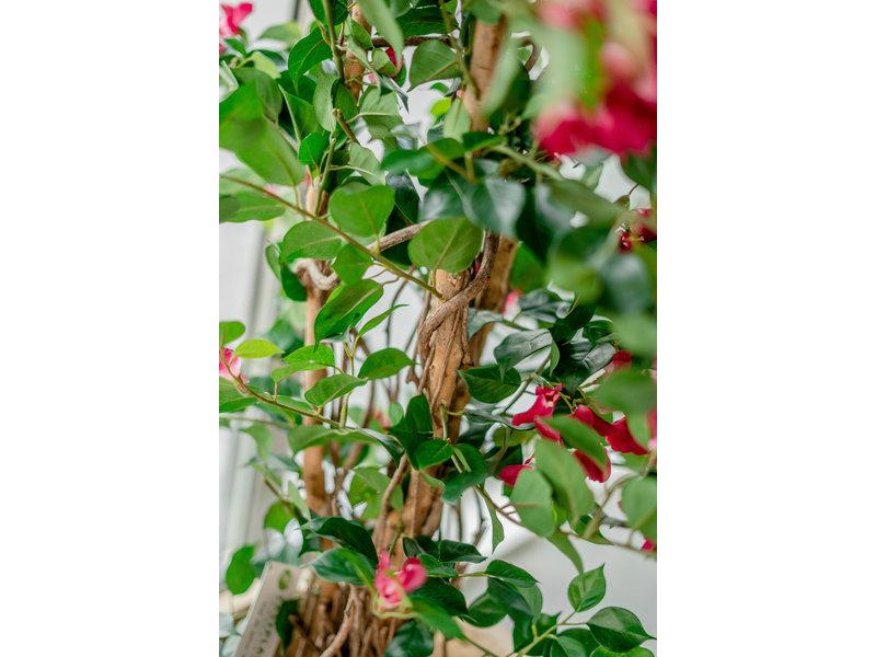 Kunstplant Bougainvillea Liana Fuchsia 115 cm