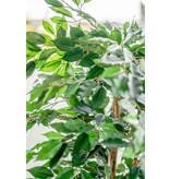 Kunstplant Ficus Groen  150 cm