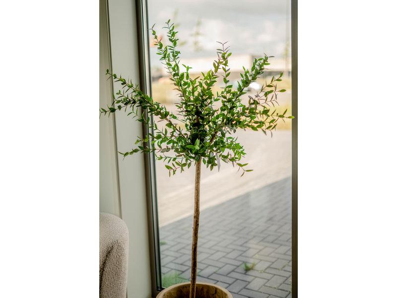 Kunstplant Eucalyptus 150 cm