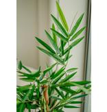 Kunstplant Bamboe Boeddha 120 cm