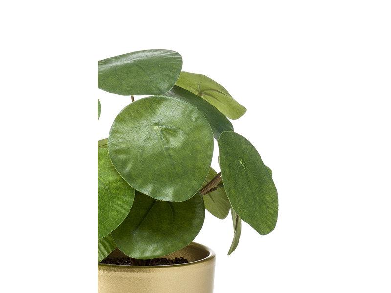 Kunst Pannenkoekplant 34 cm in gouden pot