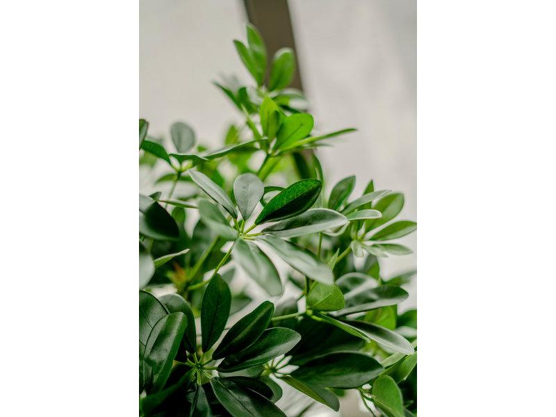 Kunstplant  Schefflera 120 cm.