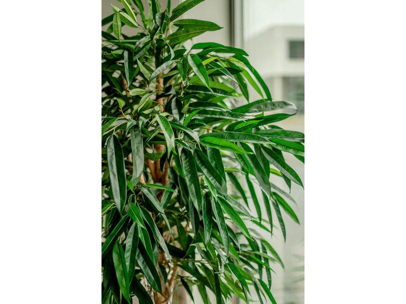 Kunstplant Longifolia XL 180 cm