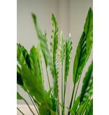 Kunstplant Calathea  80 cm