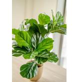 Kunstplant Fiddle Leaf 65 cm
