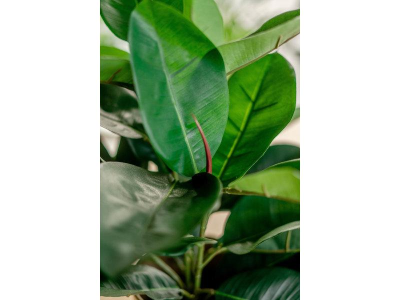 Kunstplant Rubber plant 51 cm