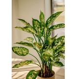 Kunstplant Dieffenbachia 68 cm