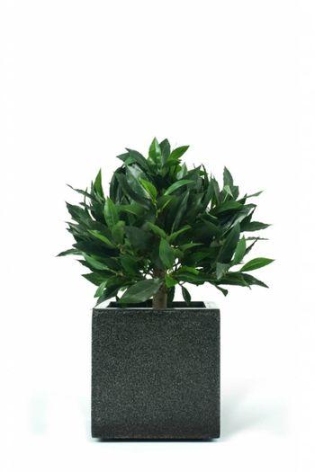 Kunstplant Laurier Boom 33 cm