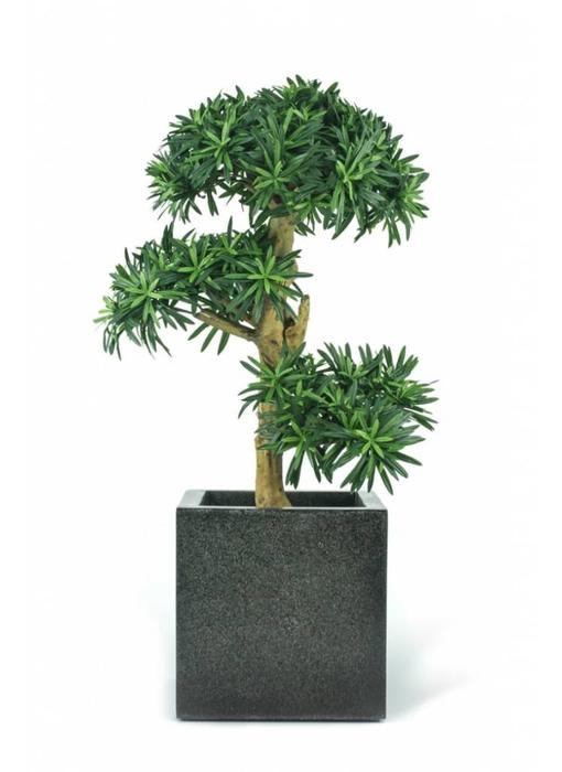 Kunstplant Podocarpus Bonsai 70 cm