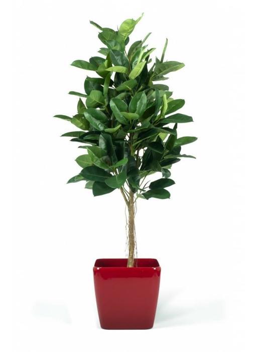 Kunstplant Rubber Plant 1.80m